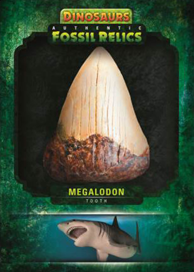 2015-Upper-Deck-Dinosaurs-Fossil-Relics-Authentic-Megalodon-Tooth